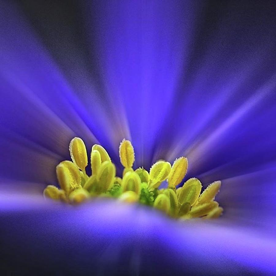 Beautiful Photograph - blue Shades - An Anemone Blanda by John Edwards