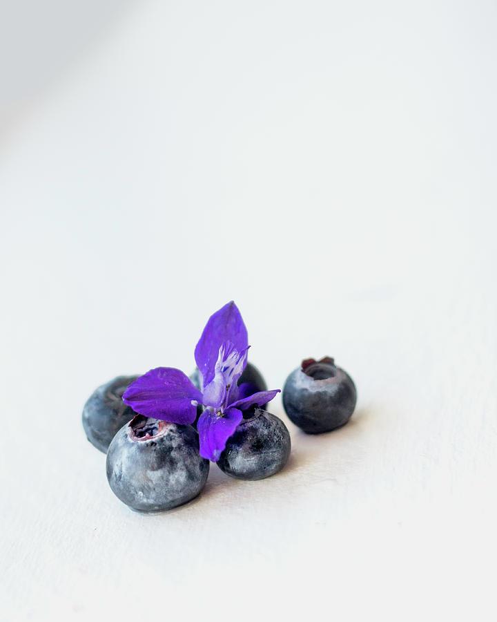 Berries Photograph - Blueberries And Purple Flower by Sigrun Saemundsdottir