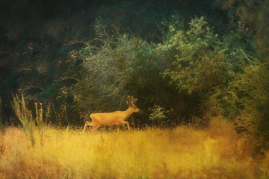 Born To Be Wild by Sherri Meyer
