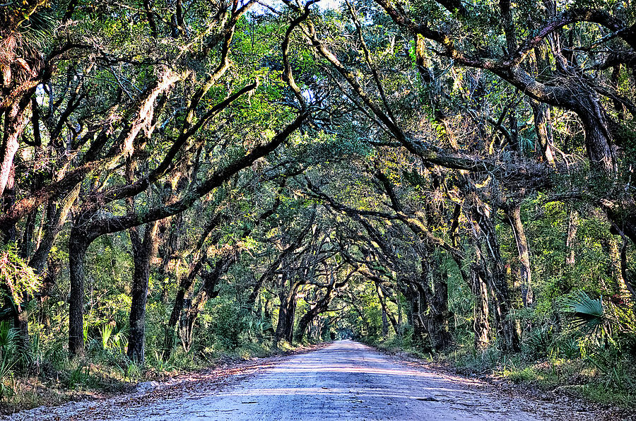 botany bay plantation spooky dirt road marsh oak trees