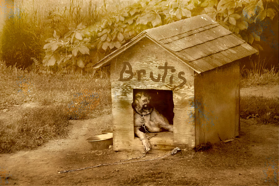 Dog Photograph - Brutis by David Yocum