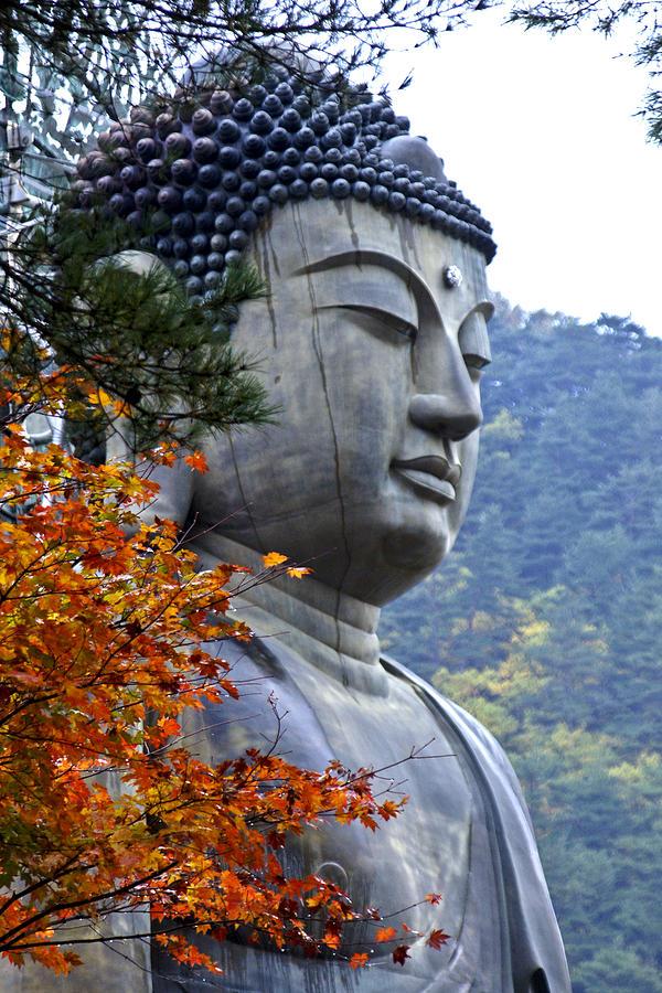 Buddha Photograph - Buddha in Autumn by Michele Burgess