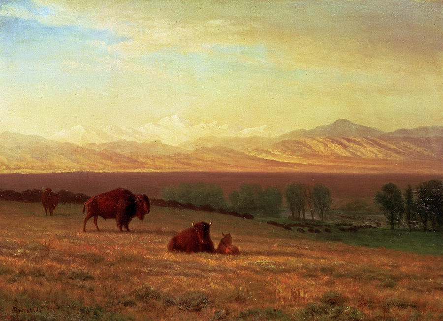 Albert Bierstadt Painting - Buffalo On The Plains by MotionAge Designs
