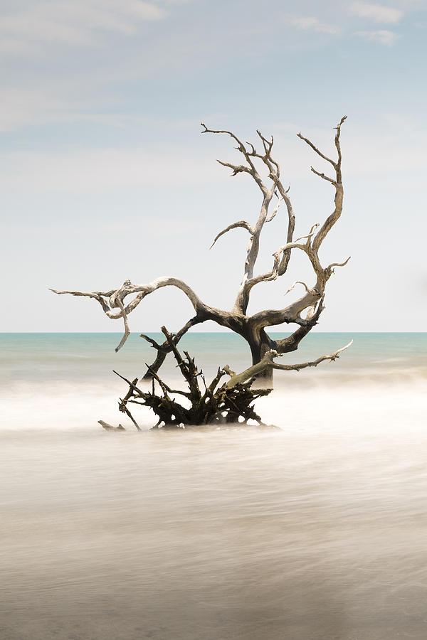 Bulls Island Photograph - Bulls Island C-vi by Ivo Kerssemakers