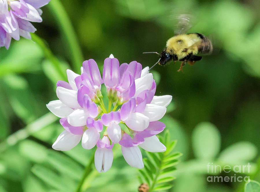 Canon Photograph - Bumble Bee Pollinating a Flower by Ricky L Jones