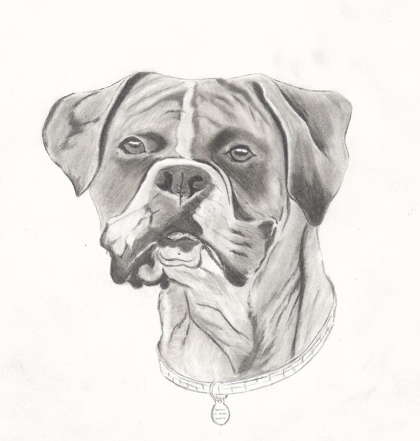 Dog Drawing - Buster by Josh Bennett