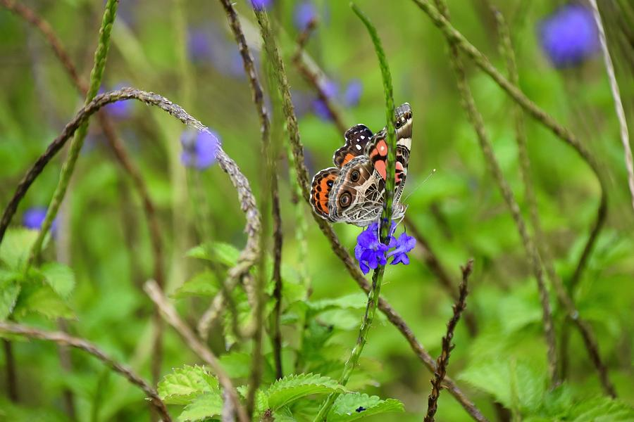 Butterfly in the Garden  by Jenny Regan