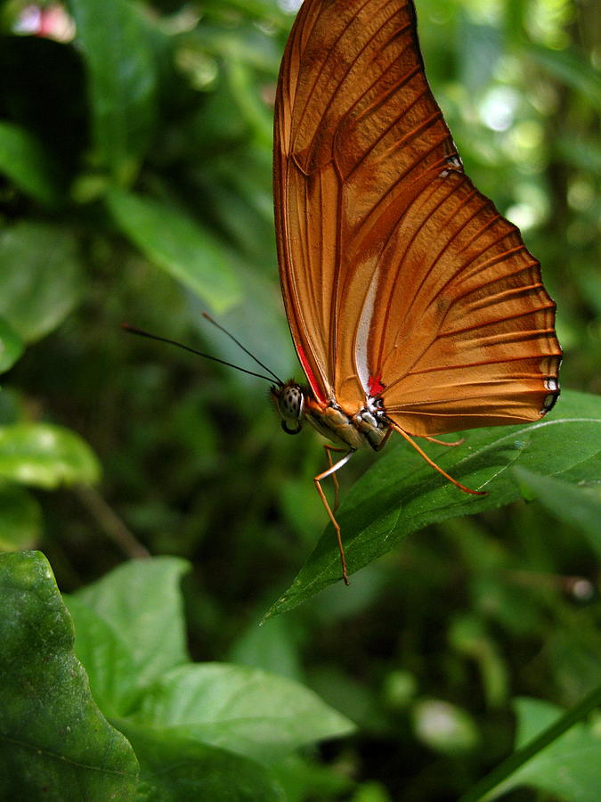 Butterfly Photograph - Butterfly by Nico Smith