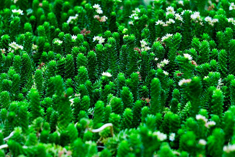 Cactus Photograph