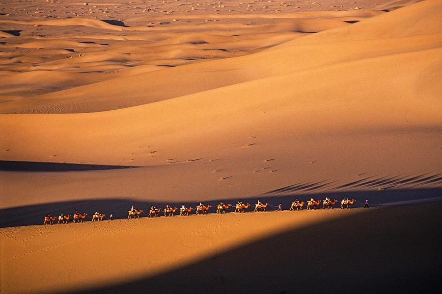 Asia Photograph - Camel Caravan Crosses The Dunes by Michele Burgess