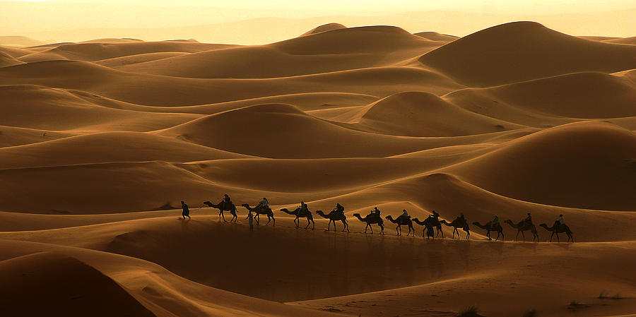 Camel Photograph - Camel Caravan In The Erg Chebbi Southern Morocco by PIXELS  XPOSED Ralph A Ledergerber Photography