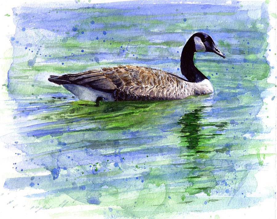 Bird Painting - Canada Goose by John D Benson
