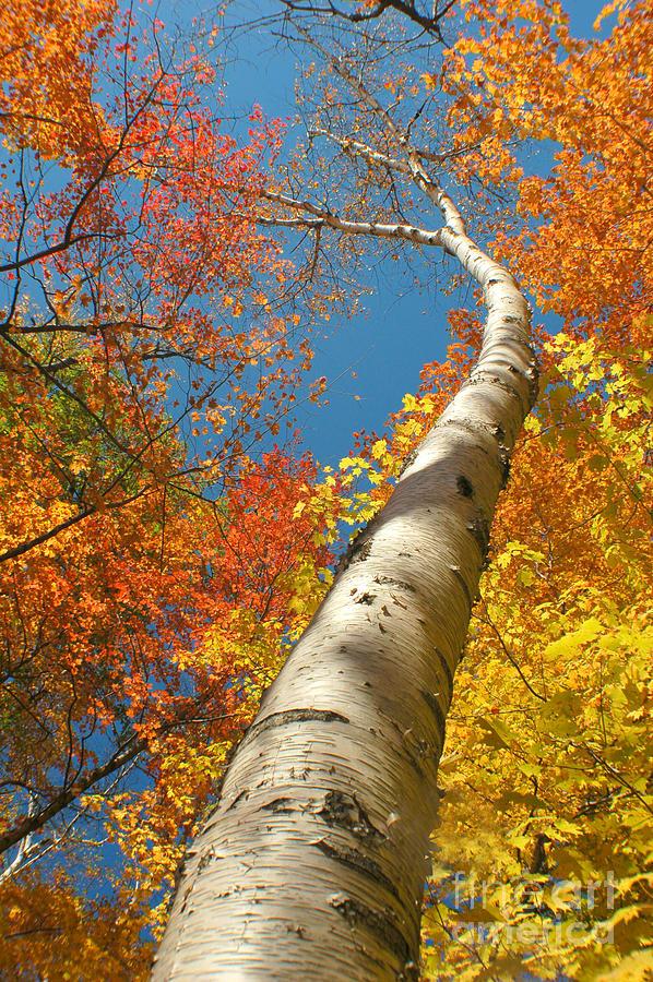 Autumn Photograph - Canadian Autumn by Mircea Costina Photography