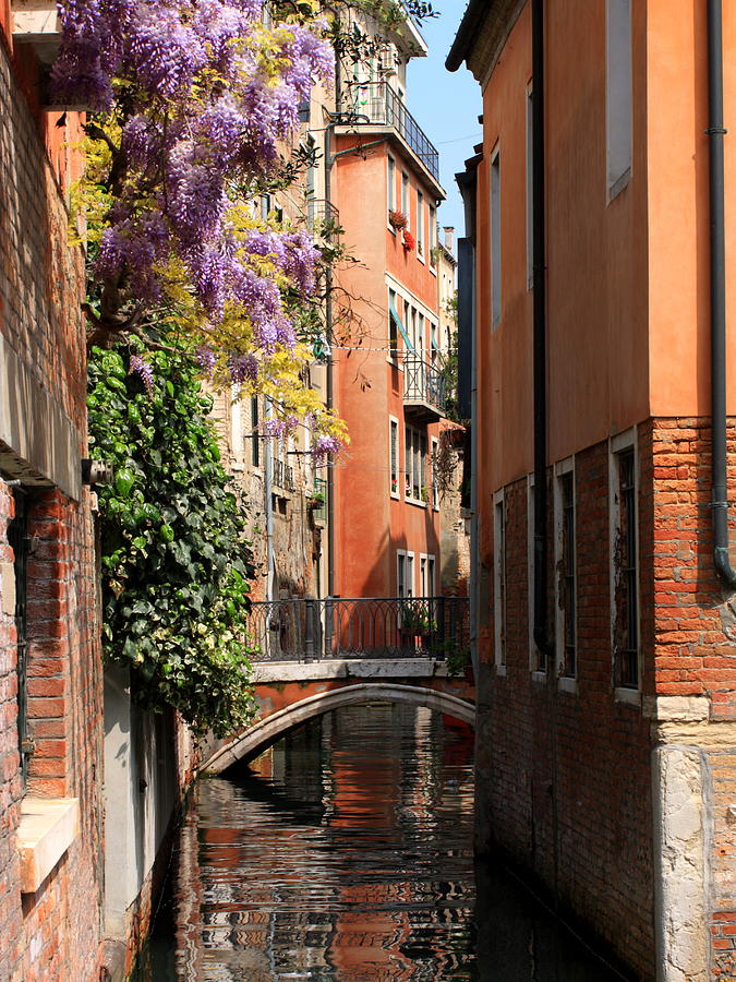 Venice Photograph - Canal in Venice with Flowers  by Michael Henderson
