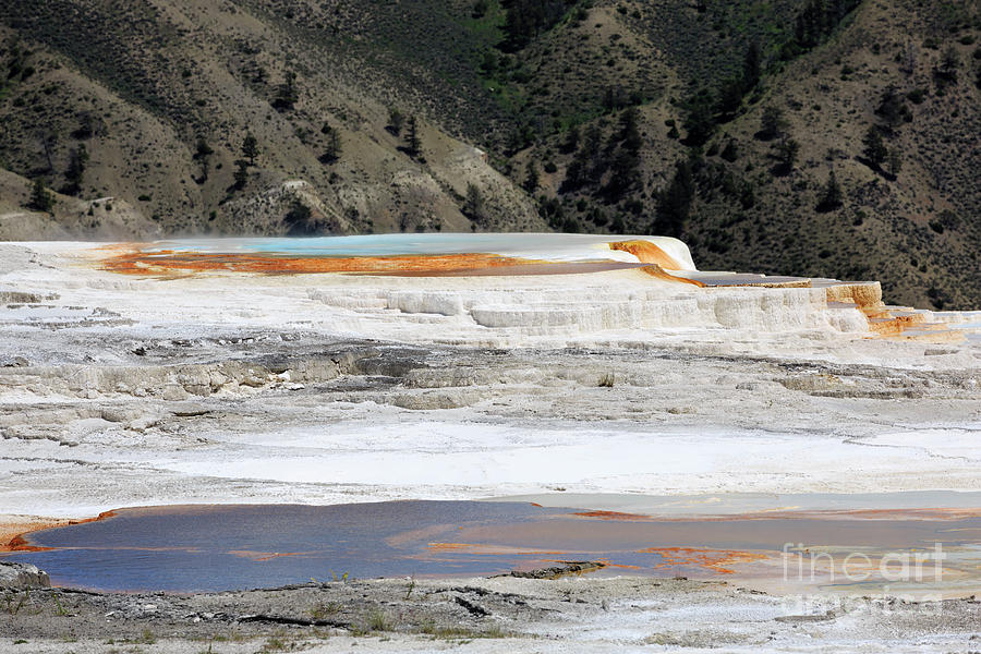 Thermal Photograph - Canary Spring At Mammoth Hot Springs Upper Terraces by Louise Heusinkveld
