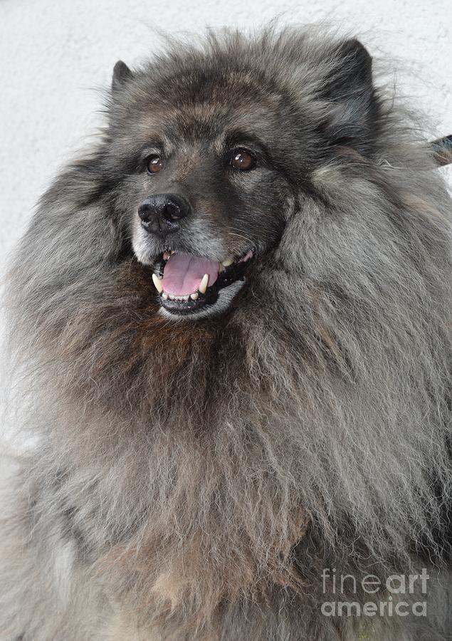 Canine Photograph - Canine Beauty by Photos  By Zulma