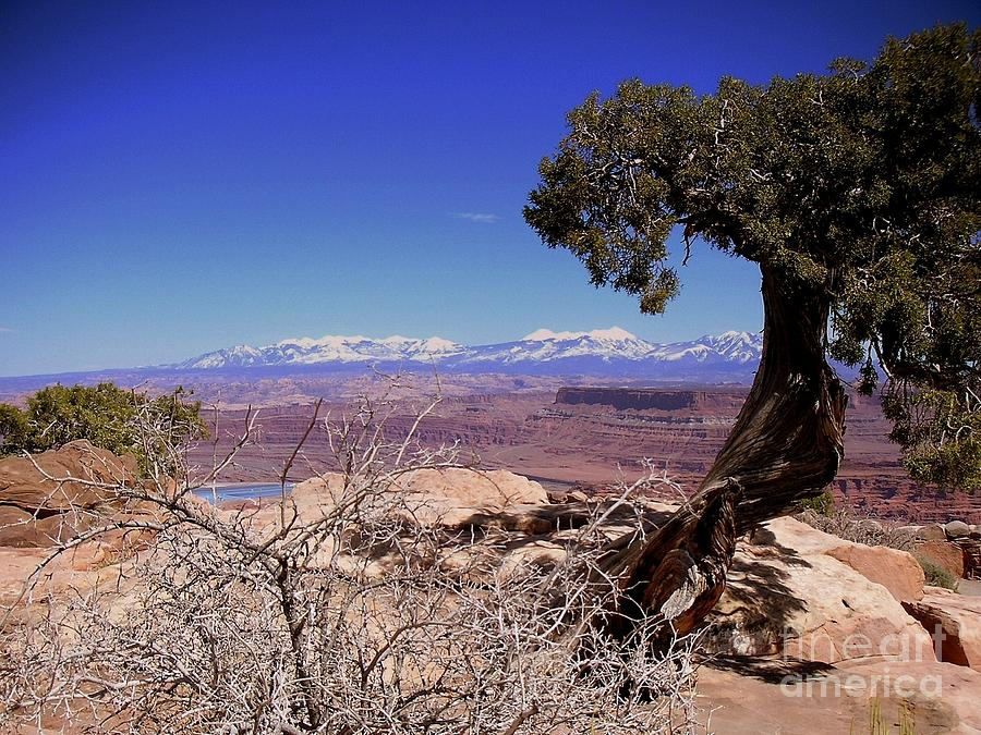 Canyon Photograph - Canyonlands 4 by Marty Koch