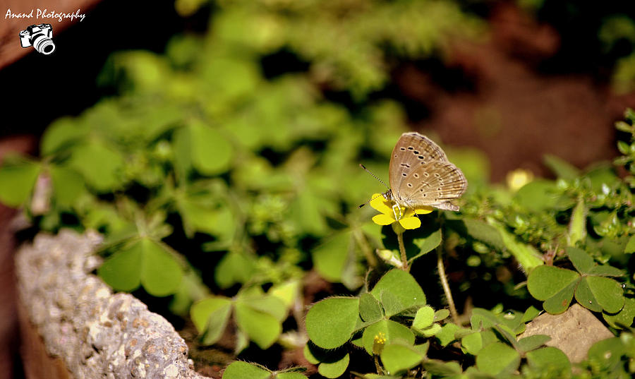 Butterfly Photograph - Capturing  by Anand