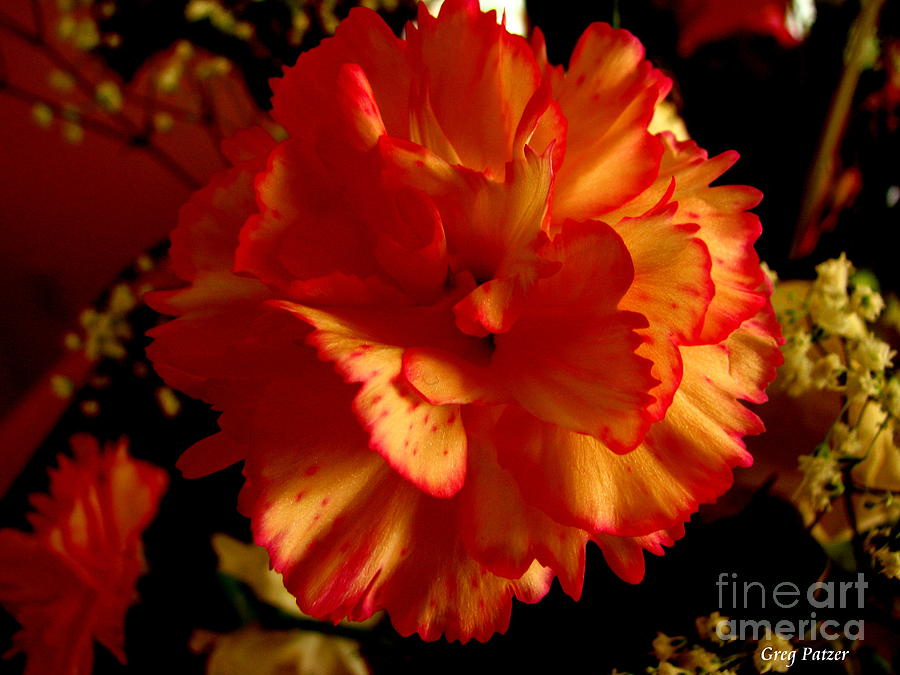 Patzer Photograph - Carnation by Greg Patzer