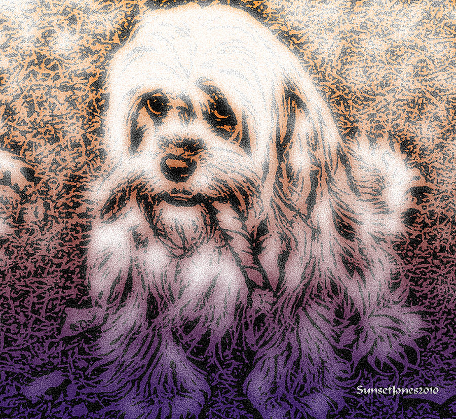 Dog Digital Art - Cassie Girl by Robert Orinski