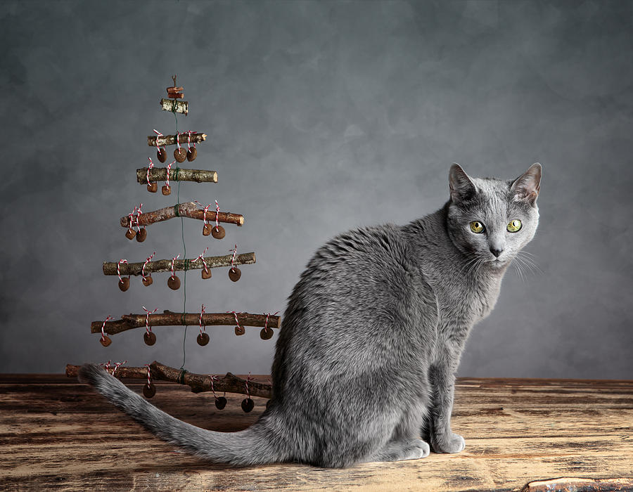Cat Photograph - Cat Christmas by Nailia Schwarz