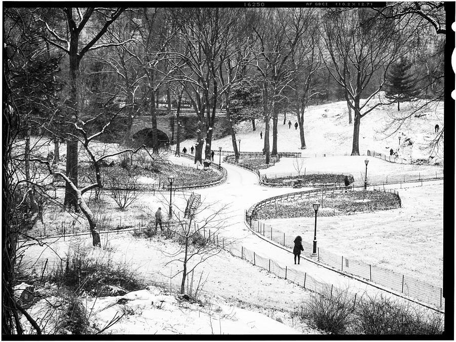 Ny Photograph - Central Park 6 by Wayne Gill