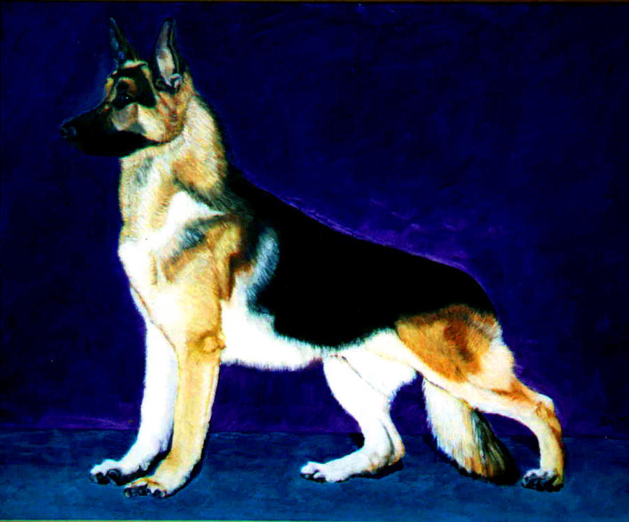 Dog Portrait Painting - Champion by Stan Hamilton