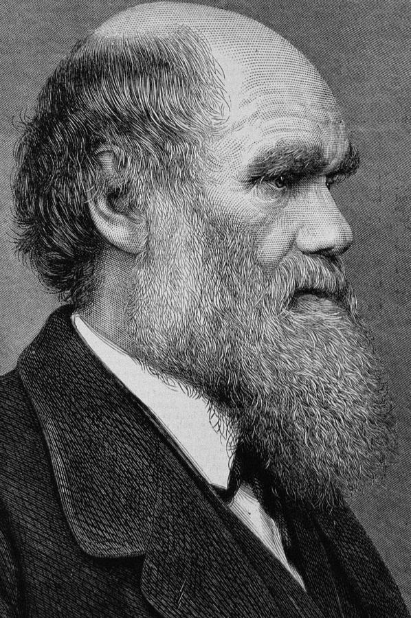 Darwin Photograph - Charles Darwin by English School