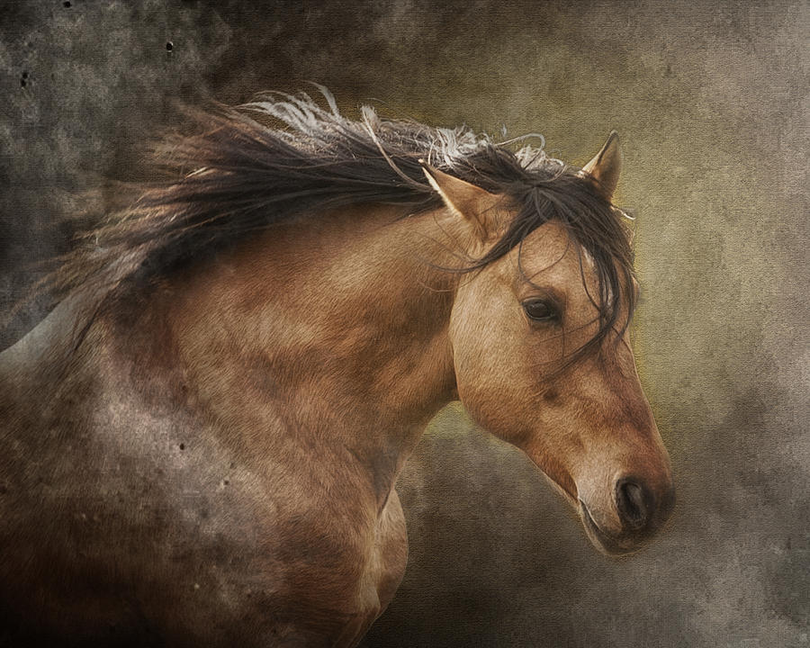 Equine Photograph - Chase The Wind by Ron  McGinnis