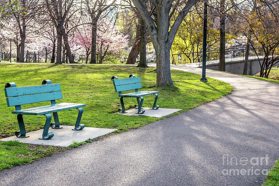 Cherry Blossom Walk by Susan Cole Kelly