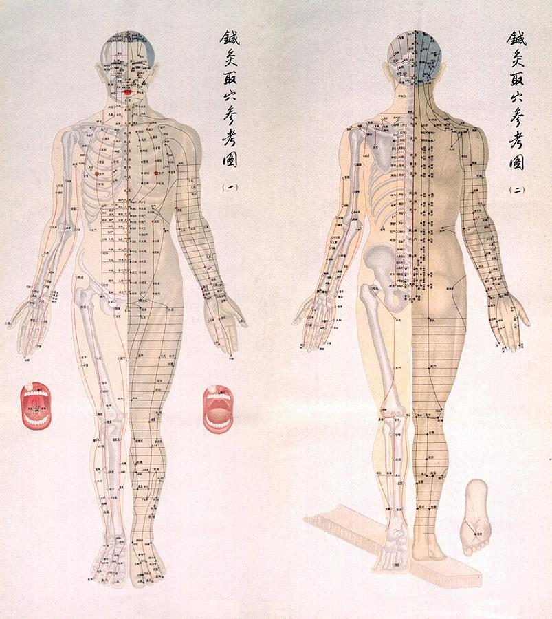 Chinese chart of acupuncture points photograph by everett