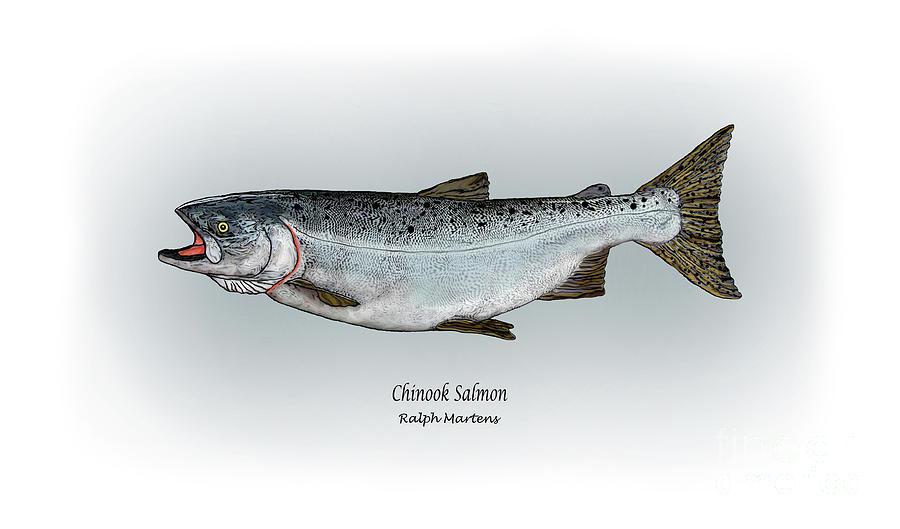 Chinook Salmon Painting - Chinook Salmon by Ralph Martens