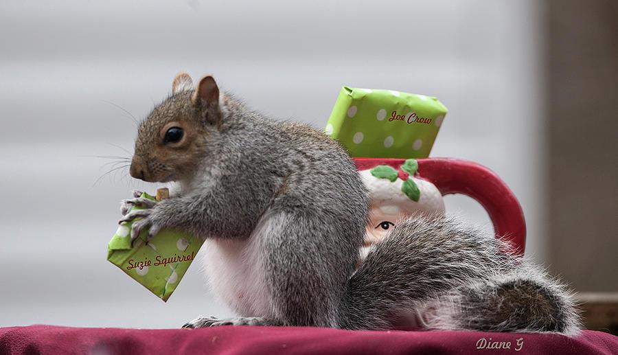 fc9776173c037 Christmas Squirrel Photograph by Diane Giurco