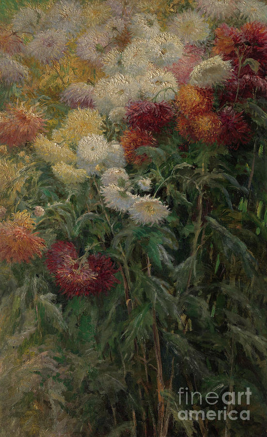Chrysanthemums Painting - Chrysanthemums In The Garden At Petit-gennevilliers by Gustave Caillebotte