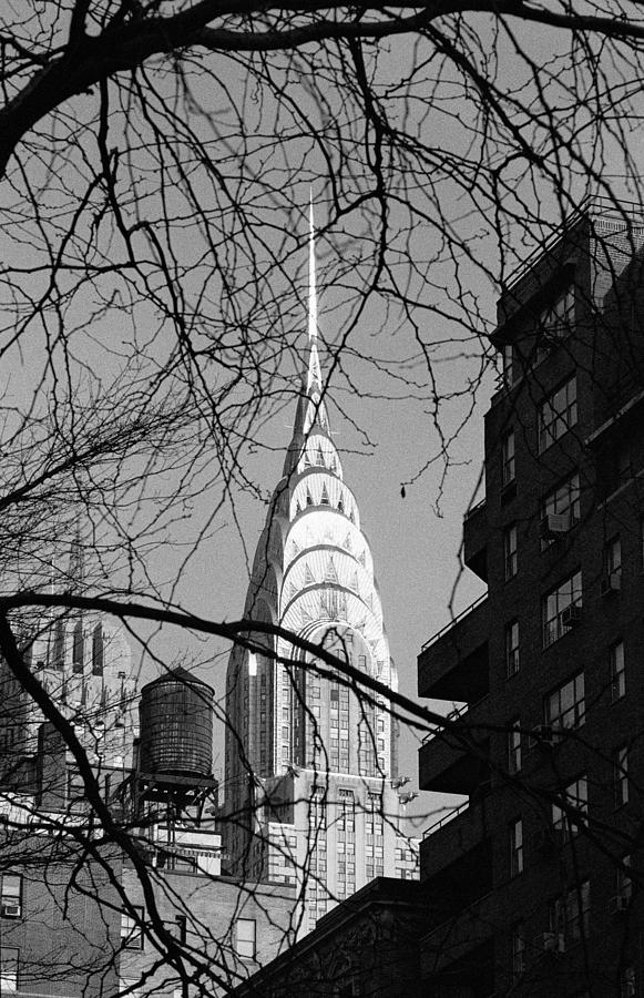 Black And White Photograph - Chrysler Building And Tree by Dave Beckerman
