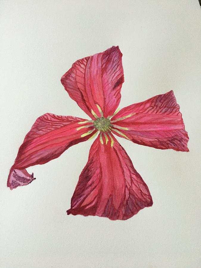 Clematis Painting - Clematis by Marina Garrison