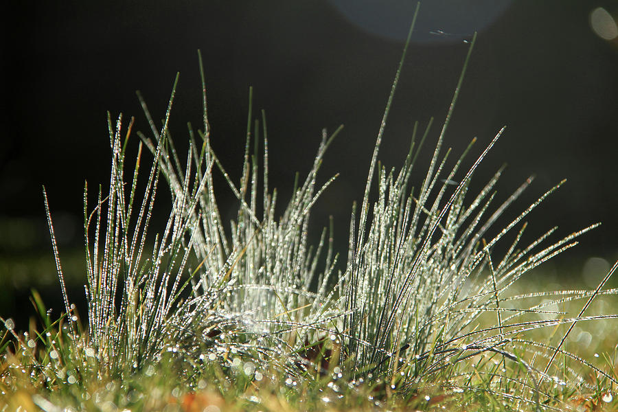 Close-up of dew on grass, in a sunny, humid autumn morning by Emanuel Tanjala
