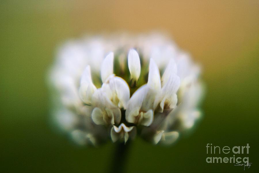 Clover Photograph - Clover by Scott Pellegrin