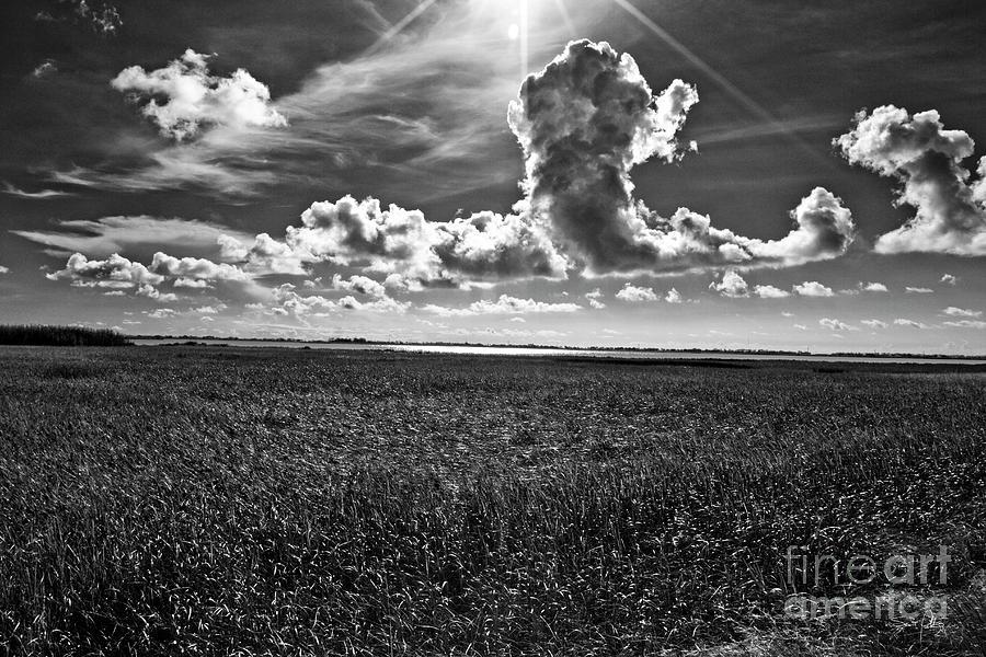 Marsh Photograph - Cocodrie Marsh by Scott Pellegrin