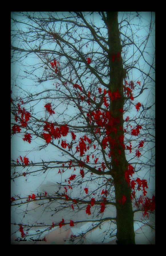 Cold Day In Winter Photograph by Linda Sannuti