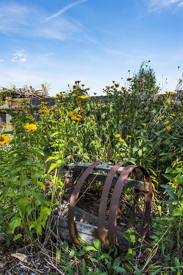 Community Garden Photograph