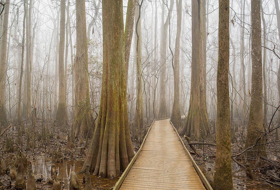 Congaree National Park by Derek Thornton