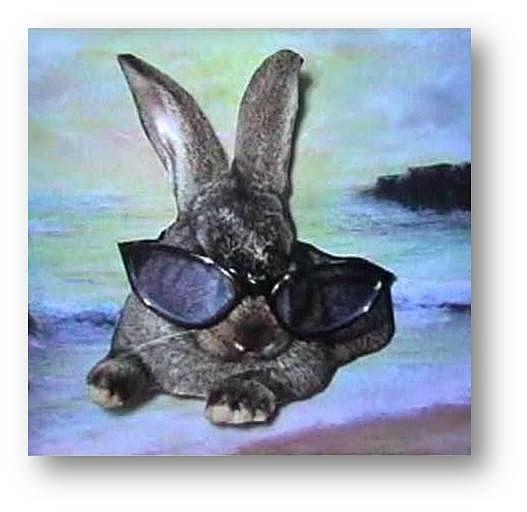 Rabbits Mixed Media - Cool In Shades by Brenda Garacci