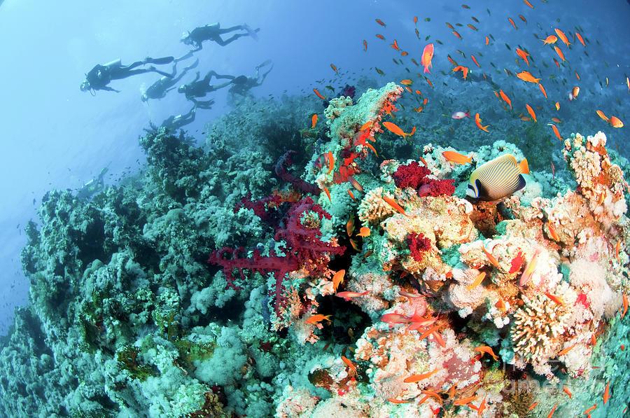 Scuba Photograph - Coral Reef  by Hagai Nativ