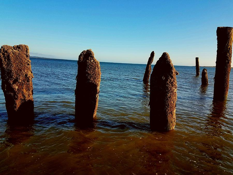 Costal Pilings  Photograph by Michele Roehl