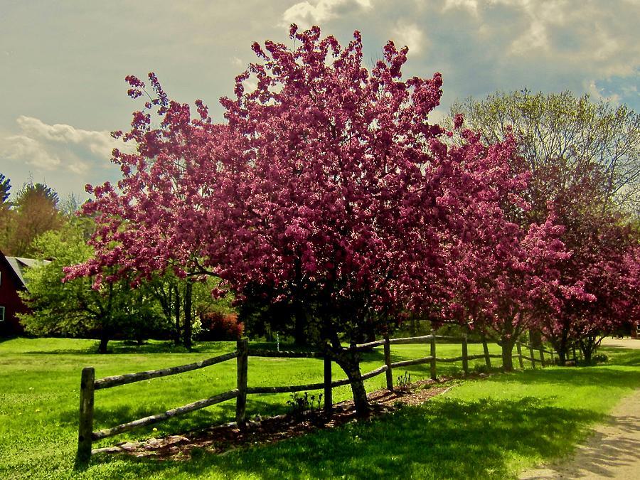 Trees Photograph - Country Lane by Elizabeth Tillar