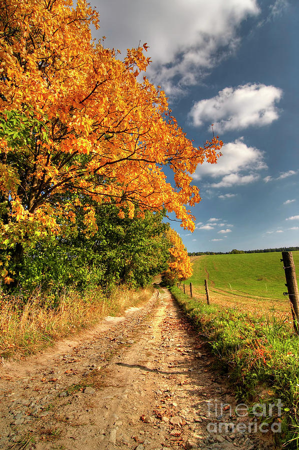 Autumn Photograph - Country Road And Autumn Landscape by Michal Boubin