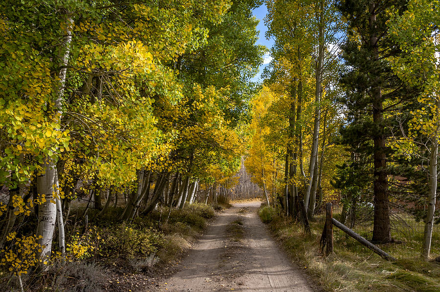 Trees Photograph - Country Road by Cat Connor