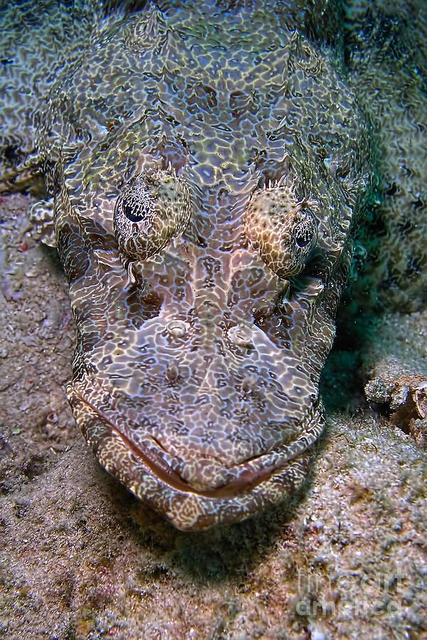 Animals Photograph - Crocodile Fish by Joerg Lingnau