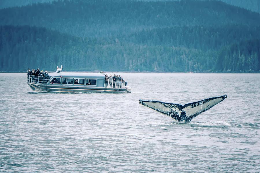 Cruise Photograph - Cruise Ship Pier 91 In Seattle Washington by Alex Grichenko